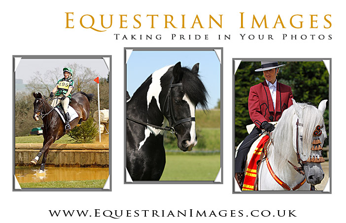 Equestrian Images