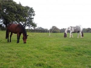 Hilary Horses